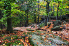 Autumn Forest in the Mountains Stock Photo