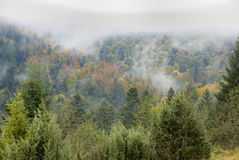 Autumn forest in mountains. With fog Stock Photos