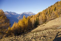 Autumn landscape in Valtellina in Italy. Autumn forest in the mountains of Mortirolo in Valtellina, Italy Royalty Free Stock Images