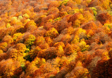 Autumn forest. In the mountains of the North Caucasus stock images