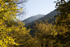 Autumn forest in mountains. Photo of a yellow autumn forest in the Caucasian mountains stock photography