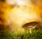 Autumn forest mushroom Stock Images