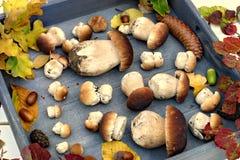 Autumn Forest Mushrooms Image libre de droits