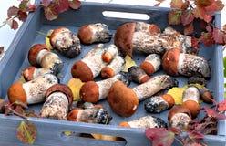Autumn Forest Mushrooms Photos stock