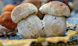 Autumn Forest Mushrooms Photographie stock