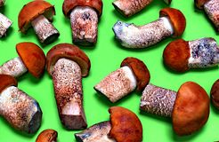 Autumn Forest Mushrooms Photographie stock