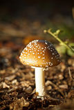 Autumn forest mushrooms Stock Image