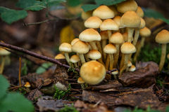 Autumn Forest Mushrooms Stockbilder