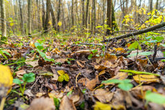 Autumn forest with mushrooms, fallen leaves and plants Stock Photo