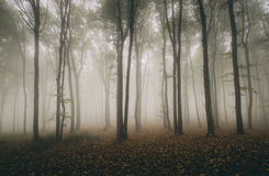 Autumn forest with mysterious fog Stock Image