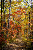 Autumn forest. A narrow path in the autumn forest royalty free stock photography