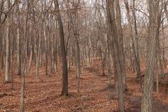 Autumn Forest Nature fotografering för bildbyråer