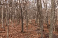 Autumn Forest Nature immagine stock
