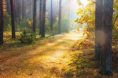 Autumn forest. Autumn nature background. Colorful trees in forest. Fall royalty free stock photo