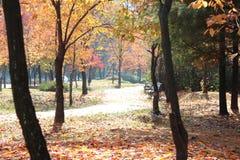 Autumn forest nature beautyl,eisure park. Autumn forest nature beauty leisure park, paths journey stock photos