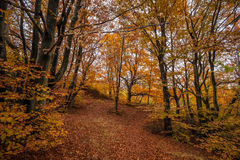 Autumn forest and nature colours Stock Photography