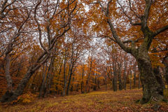 Autumn forest and nature colours Royalty Free Stock Images
