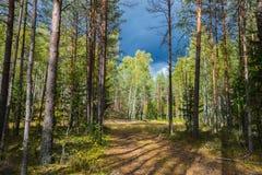 Autumn Forest Nature Livlig morgon i skog med solstrålar till och med filialer av träd Landskap av naturen med solljus arkivfoton
