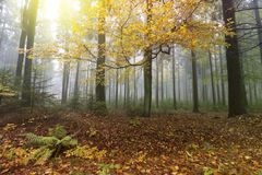 Autumn Forest. Nature Scene. Colorful Leaves and Trees in Fog stock photography