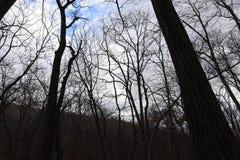 Autumn Forest Nature Trädkonturer mot molnig himmel arkivbild