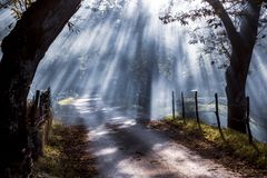 Autumn forest nature. Vivid morning in colorful forest with sun rays through branches of trees. Scenery of nature with sunlight. Autumn forest scene. Vivid royalty free stock photos