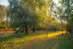 Autumn forest near  a river. Autumn forest near a river at sunset Royalty Free Stock Photo