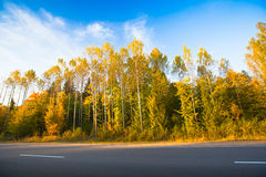 Autumn forest near the road Royalty Free Stock Photos
