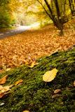Autumn forest with nearby road. Autumn scenery, leaf on the moss is in focus, the road behind is blurred royalty free stock image