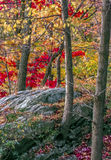 Autumn in the forest Stock Photography