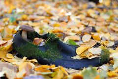 Autumn forest. Old shoe lost in the autumn forest, in which the fungus has grown Stock Photos