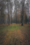 Autumn forest in overcast day Stock Image