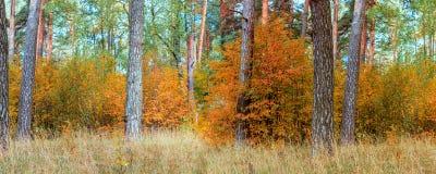 Autumn Forest Panorama Arkivfoton