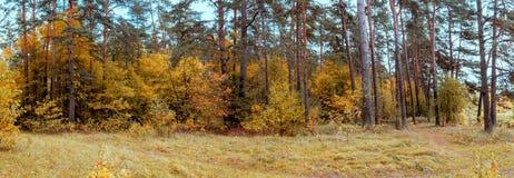 Autumn Forest Panorama Royaltyfri Foto