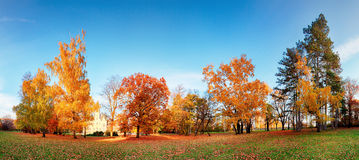 Autumn forest panorama in park Stock Images