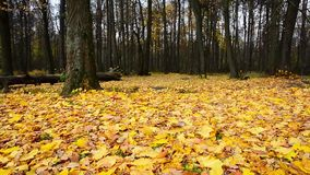 Autumn forest park stock video footage