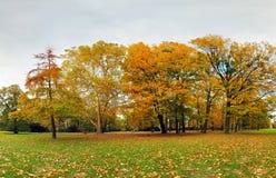 Autumn forest in park, Bratislava Royalty Free Stock Photos