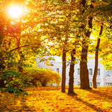 Autumn forest or park Royalty Free Stock Image