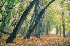 Autumn forest park in fog Royalty Free Stock Photo