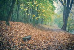 Autumn forest park in fog Royalty Free Stock Images