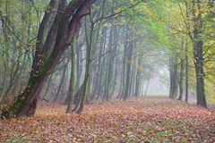 Autumn forest park in fog Stock Photo