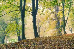 Autumn forest park at the river bank in fog Stock Photo
