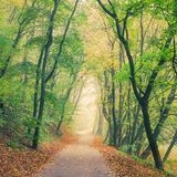 Autumn forest park road vanishing in the mist Royalty Free Stock Images