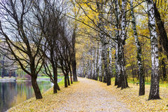 Autumn forest park. Russia Stock Images