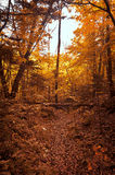 Autumn forest in the park. Stock Photos