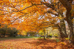 Autumn forest in the park with yellow and red trees Stock Photography