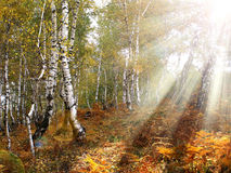 Autumn forest pastel Royalty Free Stock Photo