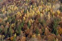 Autumn forest pastel with earthy color palette. Autumn forest pastel from above, with earthy color palette, in Transylvania, Romania Stock Image