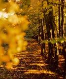 Autumn forest path. Illustrations,woods landscape stock photo