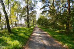 Autumn forest path. On sunny day Royalty Free Stock Photo