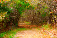 Autumn forest path. Beautiful colorful fall forest path Royalty Free Stock Photos